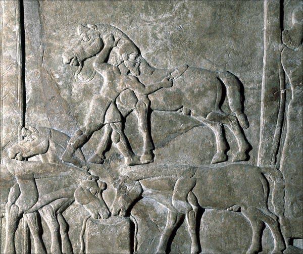 Asyrský reliéf zobrazující hřebelcování koní a jejich napájení vodou, 9. století př. n. l. Zdroj: © Trustees of the British Museum